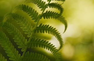Green fern in foreground with lighter green background.