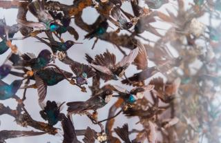 Close up of taxidermy birds on branches behind glass.