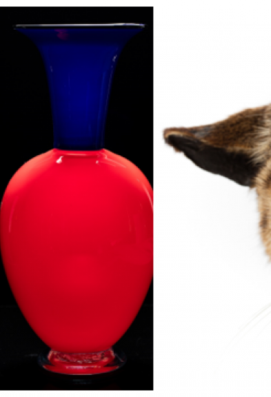 Photo of glass vases to the left, close up of a taxidermy Felis catus face.